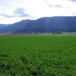 Okanagan Valley farm/ranch appraisal